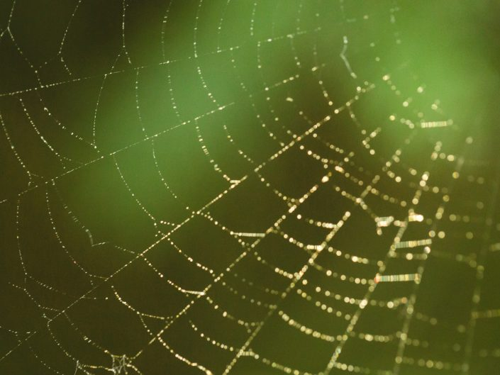 macro image of a dew covered spider web with bokeh on a green background