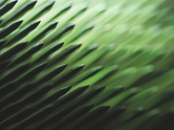 green abstract macro image showing sharp points and texture