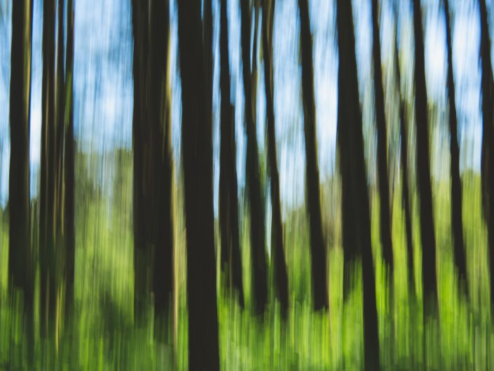 abstract image of trees in the forest with camera movement