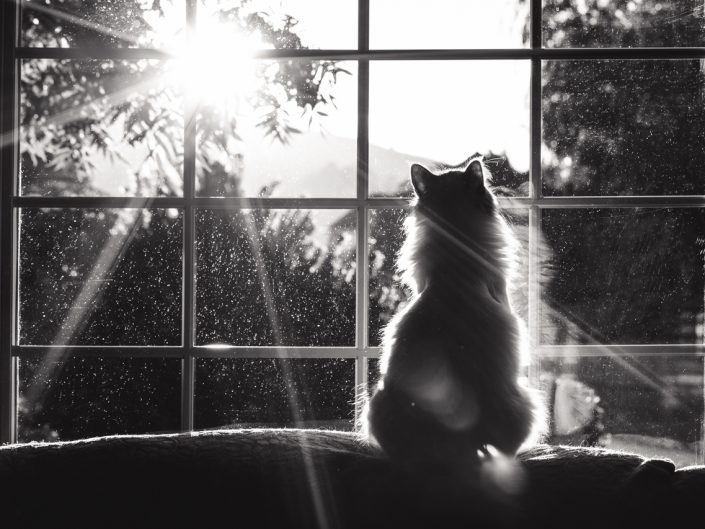 cat in a window with sun flare in black and white