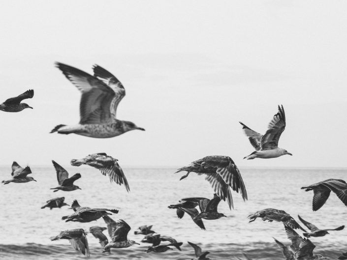 seagulls flying at the beach in black and white